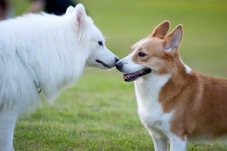 comparatif tondeuse pour chien