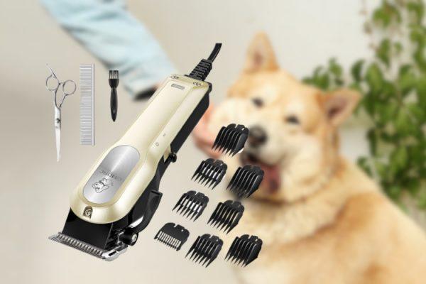 omroc tondeuse chien avis