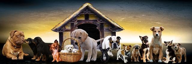 plusieurs races de chien sur la même photo