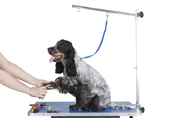Utiliser une table de toilettage pour prendre soin de votre chien