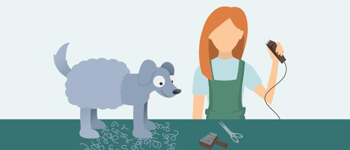 Toutes les étapes pour tondre un chien - le guide utile