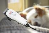 Tondeuse WAHL Show Pro : une tondeuse pour chien performante à petit prix ? Avis et Test